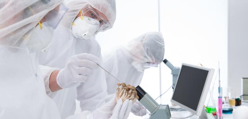 chercheurs prélèvement champignons