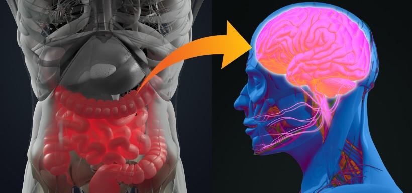 Le microbiote intestinal, point de contrôle de l'humeur ?!